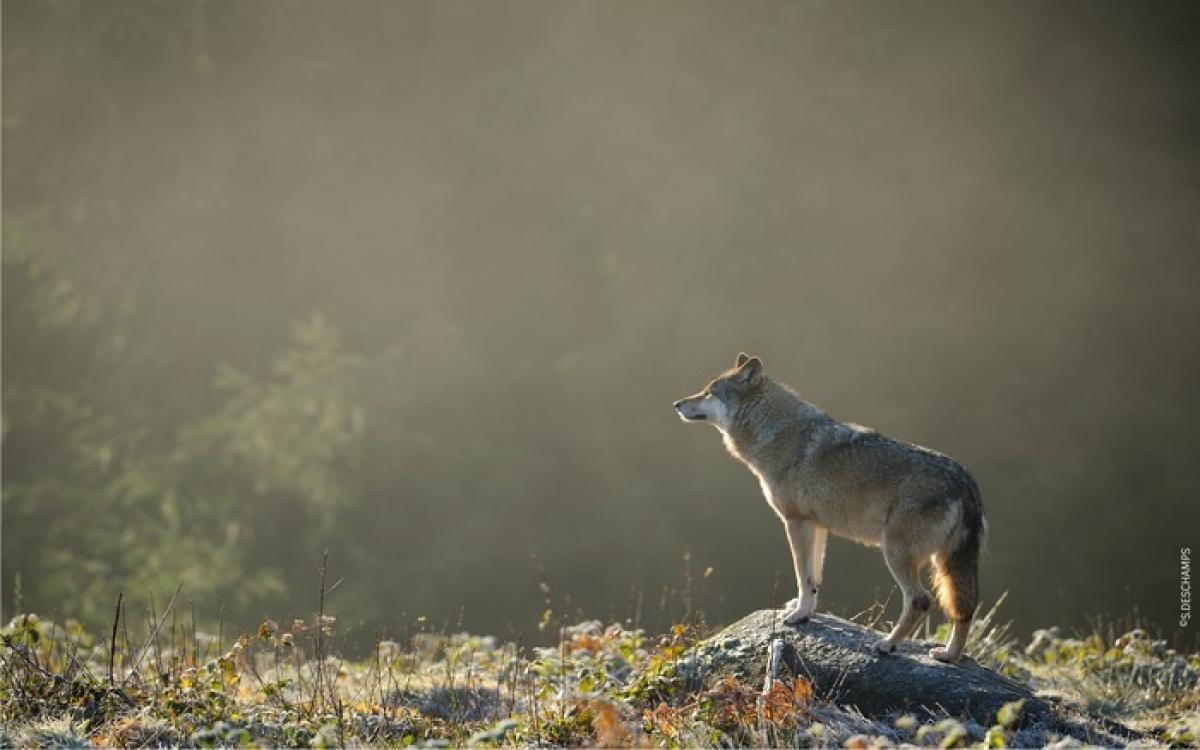Voyage - Etoil'tours - Parc animalier - Les loups de Chabrières